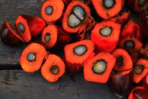 palm, oil, kernel, seeds, oilseeds, crude, cpo, pko