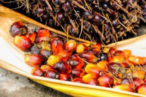 Palm fruits crop