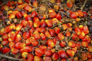 Malaysia Palm Oil Exports Duty